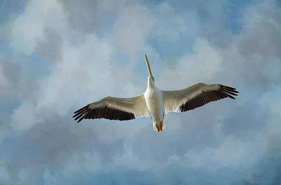 Waterbirds Photograph - Soaring High by Kim Hojnacki