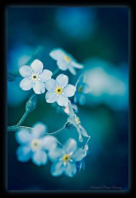 Photograph - Soft Blue by Michaela Preston