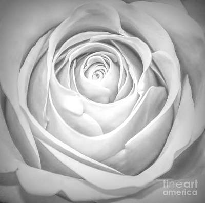 Photograph - Soft Petals by Paulette Thomas