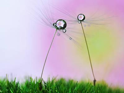 Seed Photograph - Soft Summer by Heidi Westum