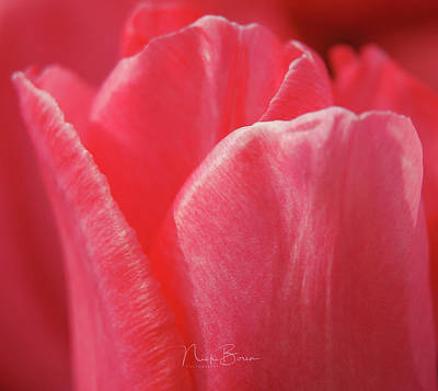 Photograph - Softly  by Nick Boren
