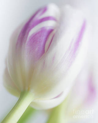 Photograph - Softness by Linda Hoye