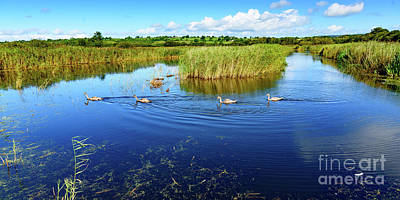 Photograph - Somerset Levels by Colin Rayner