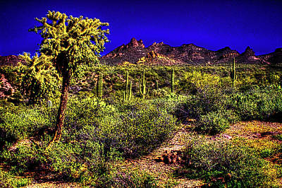 Photograph - Sonoran Desert In The Superstition Wilderness by Roger Passman