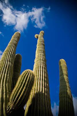 Sonoran Desert Art Print by Patrick  Flynn