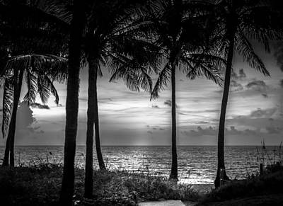 Photograph - South Florida by Louis Ferreira
