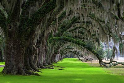 Photograph - Southern Oaks by Serge Skiba