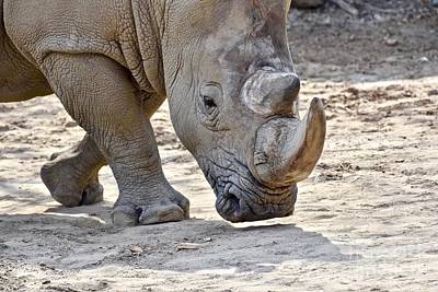 Typographic World Rights Managed Images - Southern White Rhino Royalty-Free Image by Jeramey Lende
