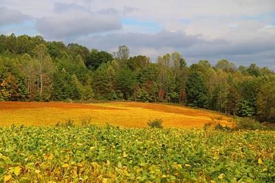 Photograph - Soybean Field by Kathryn Meyer