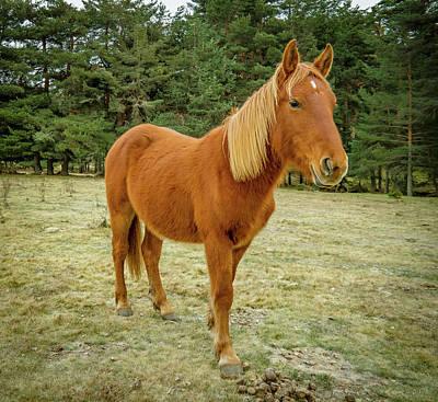 Photograph - Spanish Horse by Henri Irizarri