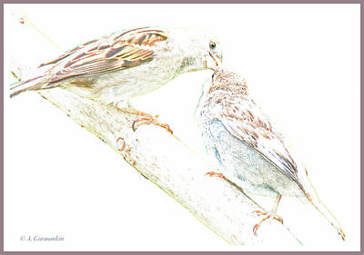 Digital Art - Sparrow Mother Feeds Juvenile by A Gurmankin