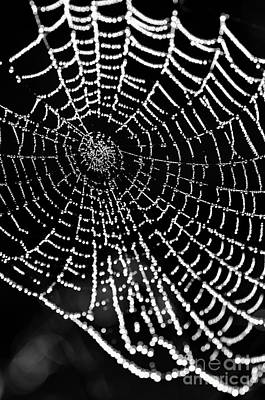 Photograph - Spider Web Jewels by Tamara Becker