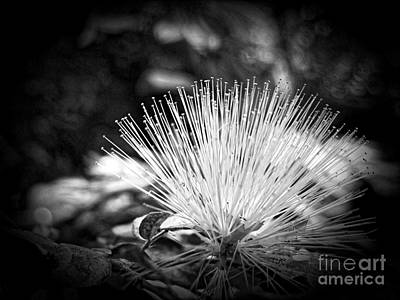 Spiky Petals Photograph - Spiked by Onedayoneimage Photography
