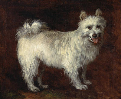 English Painting - Spitz Dog by Thomas Gainsborough