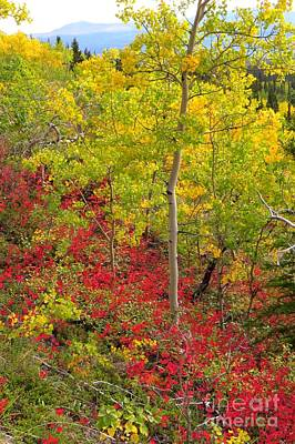 Photograph - Splash Of Autumn by Frank Townsley