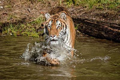 Photograph - Splashin' by Teresa Wilson