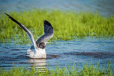 Photograph - Splish Splash by Cathy Kovarik