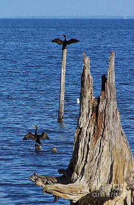 Cormorant Photograph - Spread Out by Jennifer Robin