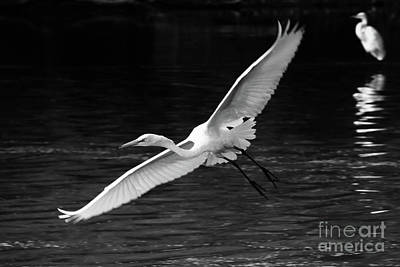 Photograph - Spread Your Wings by Anita Oakley