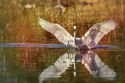 Photograph - Spread Your Wings  by Saija Lehtonen
