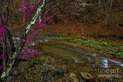 Cercis Canadensis Photograph - Spring Along Anthony Creek by Thomas R Fletcher