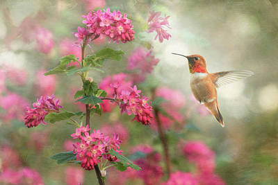 Photograph - Spring Arrival by Angie Vogel
