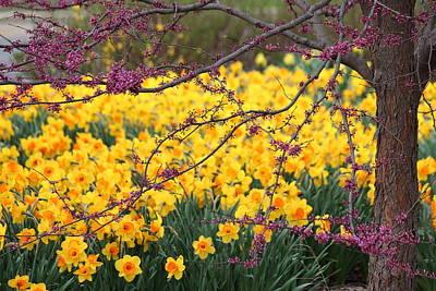 Flower Photograph - Spring Awakening by Rosanne Jordan
