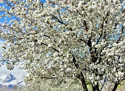 Photograph - Spring Blossoms by Marilyn Diaz