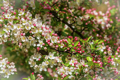 Photograph - Spring Blossoms by Mark Mille