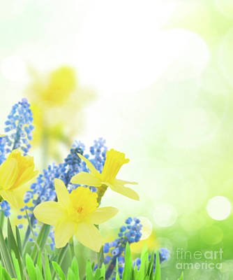 Photograph - Spring Flowers by Anastasy Yarmolovich