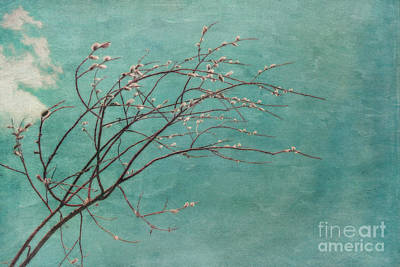 Spring Blues Art Print by Priska Wettstein