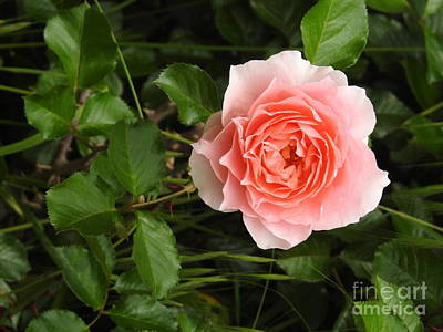 Photograph - Spring Delight by Leslie Hunziker