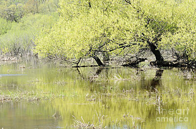 Photograph - Spring Green by Larry Ricker