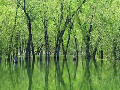 Photograph - Spring Green Reflections  by Lori Frisch