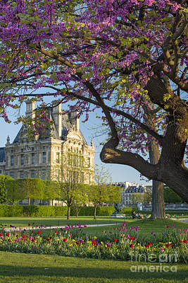 Photograph - Spring In Paris by Brian Jannsen