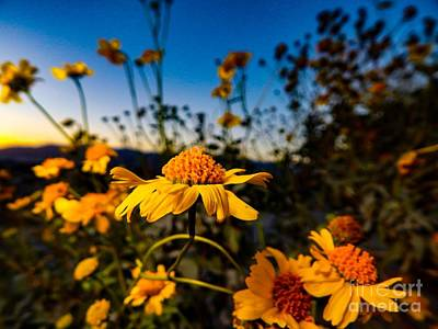 Photograph - Spring Is Here 2 by Chris Tarpening