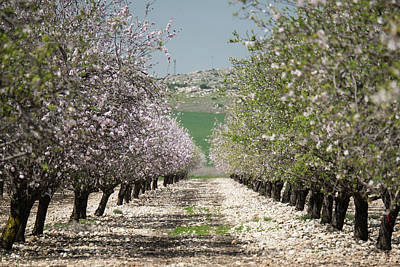 Photograph - Spring Is Here by Yoel Koskas