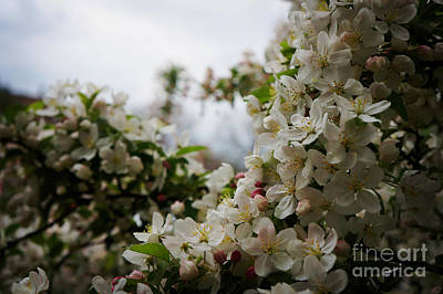 Spring Lanscape Print by Celestial Images