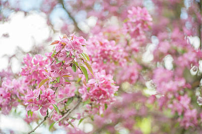 Photograph - Spring Lightness by Jenny Rainbow