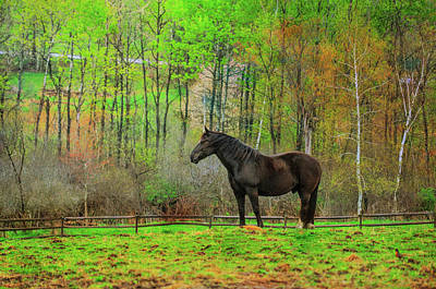 Photograph - Spring Pasture Painting by JAMART Photography