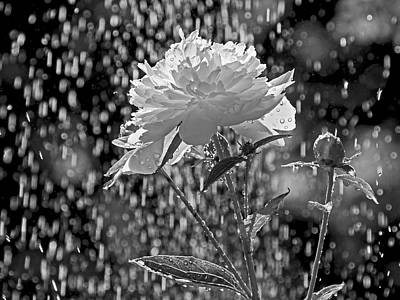 Photograph - Spring Rain - 365-13 by Inge Riis McDonald