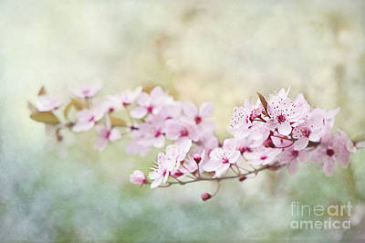 Spring Reverie Art Print