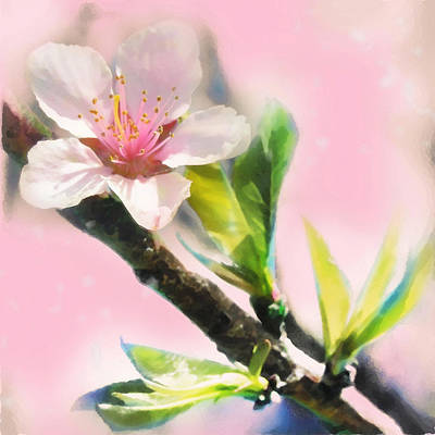 Spring Sunrise Art Print by Gina Signore