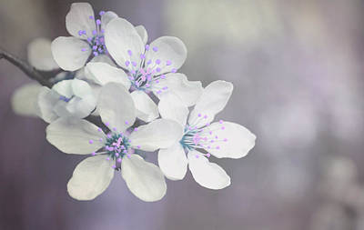 Photograph - Spring Tenderness by Rumiana Nikolova