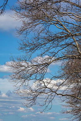 Abstract Male Faces - Spring Trees Clouds and Sky by Robert Ullmann