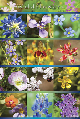 Photograph - Spring Wildflowers II by Stephen Anderson