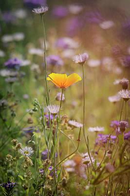 Photograph - Spring Wildflowers  by Saija Lehtonen