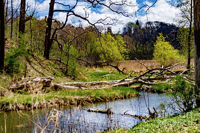 Photograph - Spring by William Norton