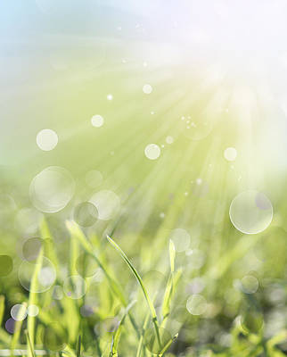 Sun Rays Digital Art - Springlight by Les Cunliffe