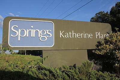 Photograph - Springs Katherine Plant by Joseph C Hinson Photography